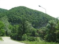 orlenok2011-41